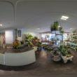 Floristik & Pflanzen Steffen Arnold